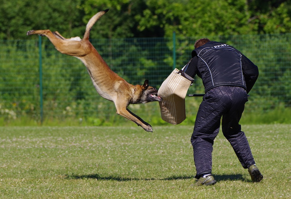 How To Train Dog To Attack-