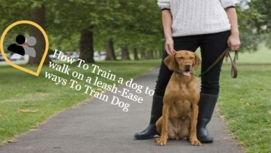 How To Train a Dog To Walk on a leash-